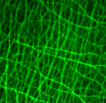 tebu-bio Cytoskeleton Research Tools Filamin Actin network
