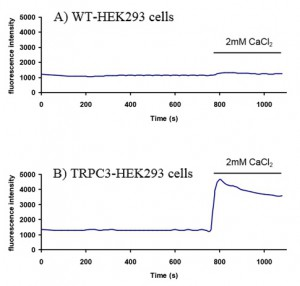 Ion channel over expressing cell lines for inhibitory screening - A practical example with TRPC3 cell line