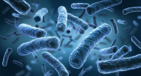 Which bacterial strains for recombinant protein expression?   tebu-bio's  blog