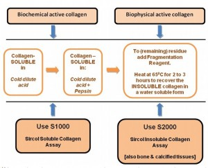 Sircoll for soluble and insoluble collagen detection - flow chart