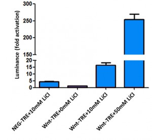 Figure 3: Monitoring of the Wnt pathway activation in HEK293a cells