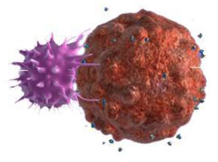 T cell - Cancer cell CAR-T Cells, Cancer Immuno-therapy, Immune-checkpoints
