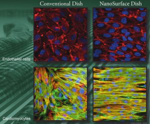 Comparison of conventional cell culture with NanoSurface dishes