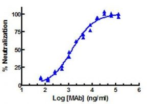 Representative curve obtained with the Human IFN Lambda 2/IL-29 Neutralizing antibody (cat. nr. 21720). Source: PBL / tebu-bio.