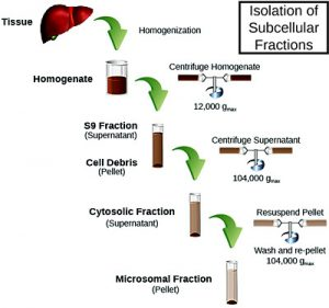 Subcellular Fraction Preparation Method