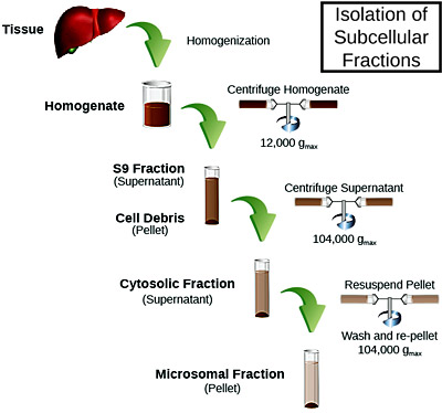 Isolation of Subcelluar Fractions for use in ADME studies - Sekisui Xenotech and tebu-bio