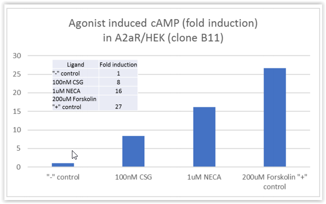 Agonist induced cAMP (fold induction) in A2aR HEK293 cells 79381 BPS tebu-bio