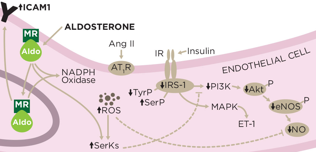 Aldosterone Regulatory Hormone. Souce Arbor Assay