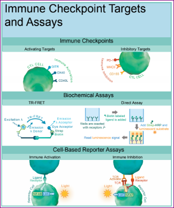 Immune checkpoint targets and assays by BPS Bioscience and tebu-bio