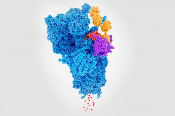 Proteasome degrading a protein (red) tagged with polyubiquitin