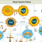 Allergic Response Pathway: get the broad picture with this map!