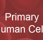 New Primary cell Models: a focus on Kidney cells