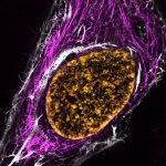 8 new fluorescent live cell imaging tools – discover SPY-probes