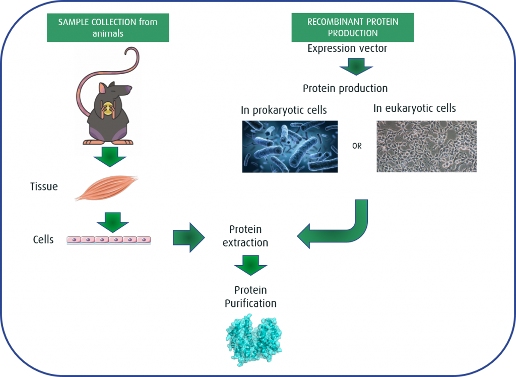 Fig 1: Sample collection vs. Recombinant protein production
