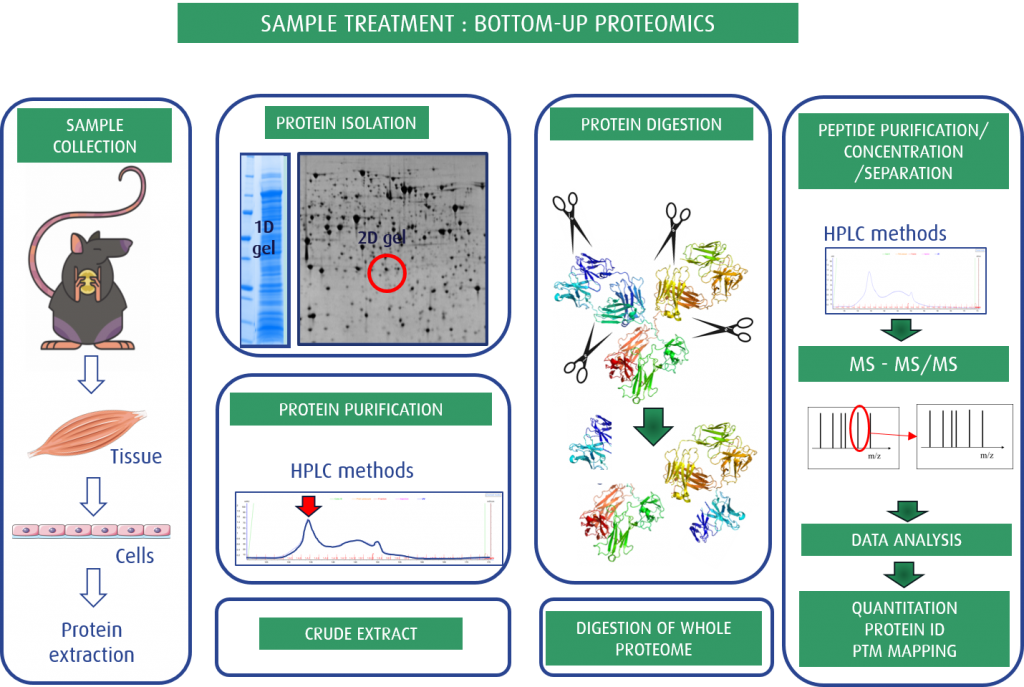 Fig. 3: Bottom-up proteomics as a Sample treatment for MS studies