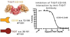 Inhibition of TIGIT:CD155 interaction by Anti-TIGIT neutralising Ab
