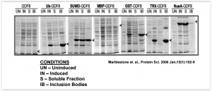 SUMOpro® fusion enhances expression and solubility in E. coli