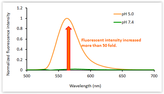 fluorescence-spectra-of-acidifluor-orange-as-a-function-of-ph-ph-5-0-vs-ph-7-4