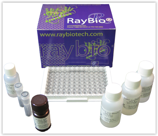 raybio-elisa-kit-by-raybiotech-and-tebu-bio
