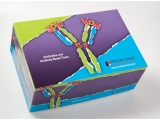 Epitope Tag Antibody Sampler Kit-Kits and Buffers tebu-bio