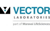 Vector Laboratories